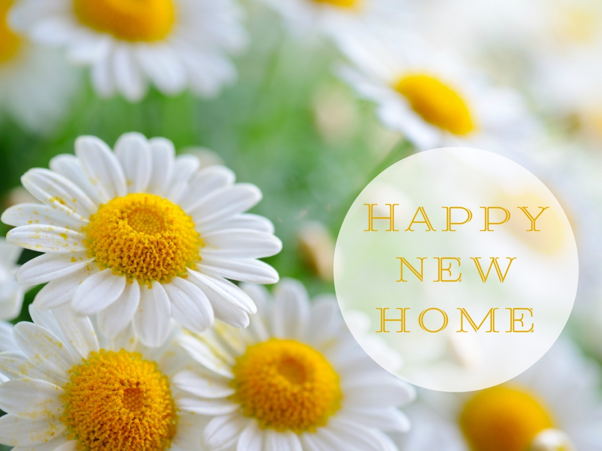 Happy new home, happy new life!